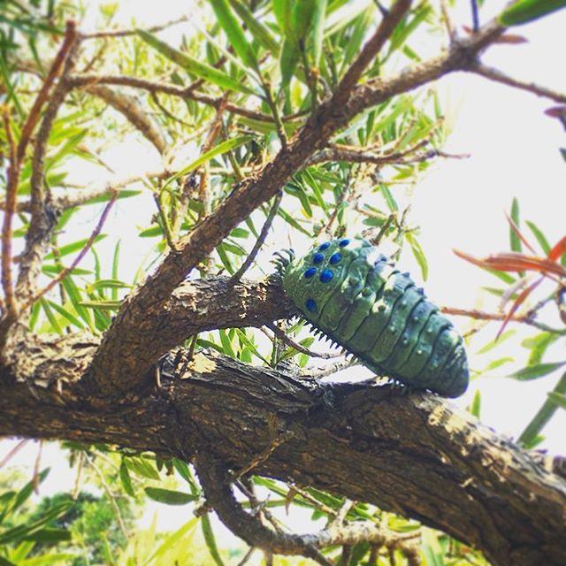 王蟲さん木に登る🌳人間は「害虫」などと呼ぶけれど、草木と虫や菌は仲良しです枯れるにも腐るにも循環と調和という秩序があるのです (from Instagram)