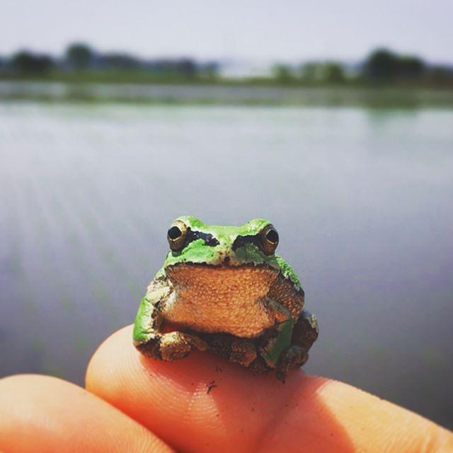 居心地がいいようで蛙さん、ずっと離れませんでした (from Instagram)