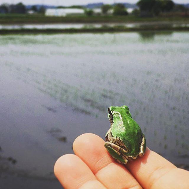 井の外の蛙大海を知る田んぼだけど(笑)まさに「感無量」そんな顔をしていました (from Instagram)