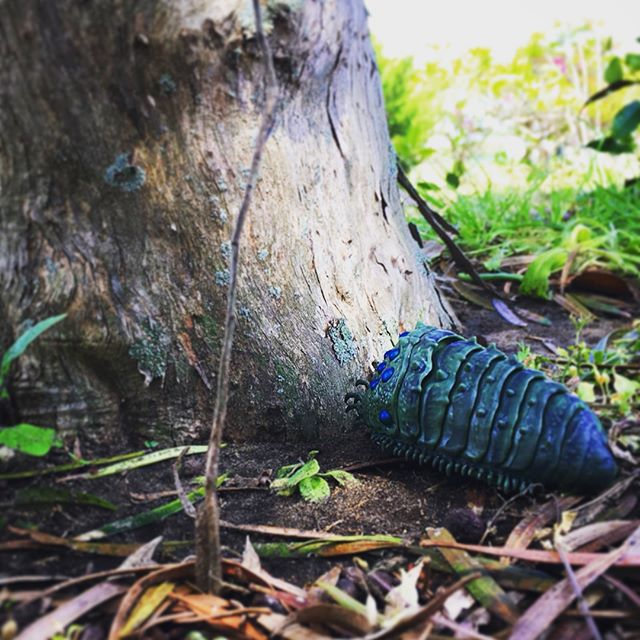 害虫や害獣や雑草と呼ばれる者達🧚♂️私は彼らを循環摂理に沿って生きる最も重要な生命だと思っています実は彼らが土地や自然を守っているその集合意識はまさにガイアですよね王蟲ってそんなガイアの化身の象徴のようでとても惹かれますこんなことをインスタで書いてても場違いで映えませんのでそろそろ他の場所を設ける準備をしています(๑˃̵ᴗ˂̵) (from Instagram)
