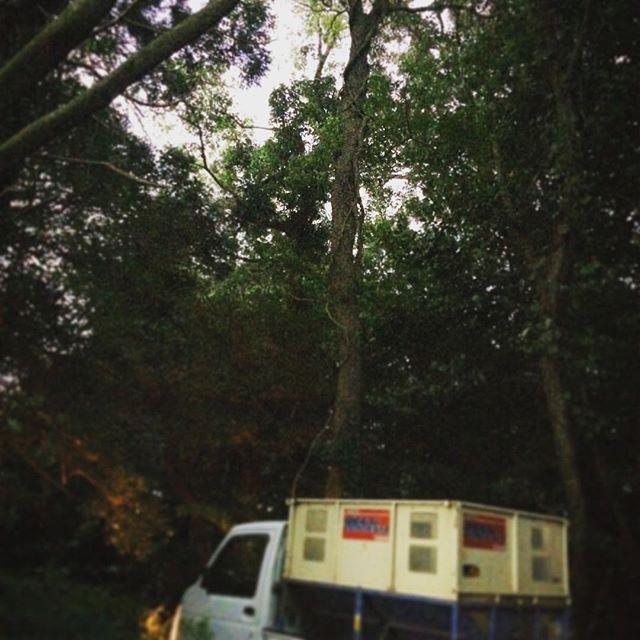 稲刈り中に雨が降ったら、森林の木々に雨宿りさせていただいたりします️守っていただくことが多いです🌲 (from Instagram)