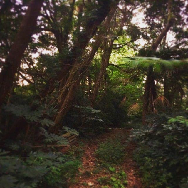この辺りでは、この場所だけが「残された自然」あえて未開墾として雑木林を残しています🌲キジやタヌキやウサギ様々な野生生物がいますがほっといてます🐇つづく… (from Instagram)