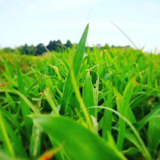 ああこの美しき雑草の世界地球は緑色の惑星 (from Instagram)
