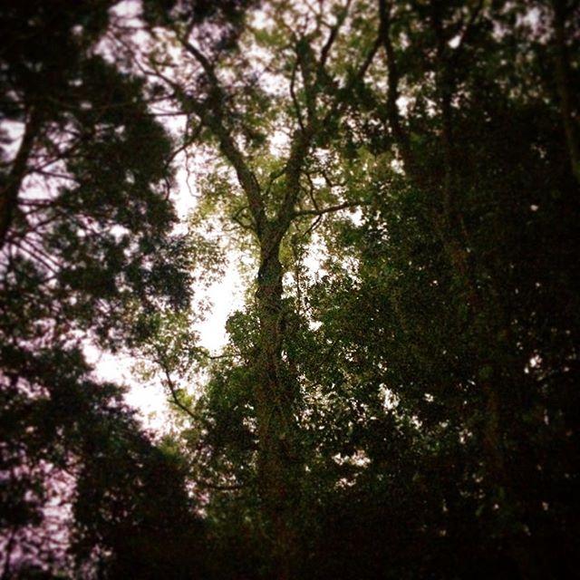 森には森の秩序があって、田んぼに挟まれたこんな小さな林でも、人間は不法廃棄物とか捨てていくのです。森がそれを浄化するのに何百年何千年とかかる。「不法」とはなんでしょうね?森の法と人の法、地球や宇宙はどちらを選ぶかなʕ•ᴥ•ʔ (from Instagram)