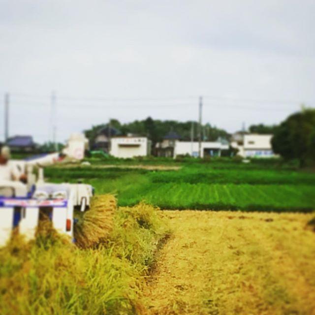稲刈りはもうとっくに終えてますが、画像がまだまだあるので載せ続けちゃいます (from Instagram)