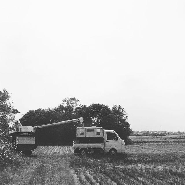 もうとっくに終えてますが、稲刈り時の写真をしばらく載せちゃうかもです^ - ^ (from Instagram)
