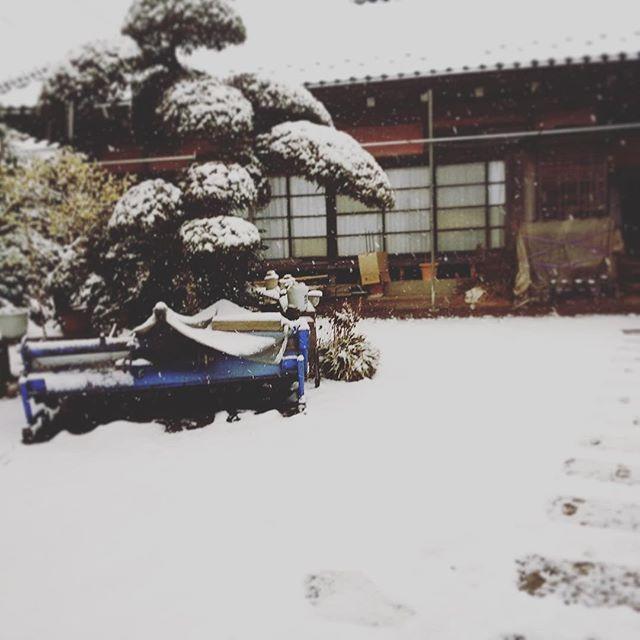 この間は温かい千葉県でも雪が降りました☃️ (from Instagram)