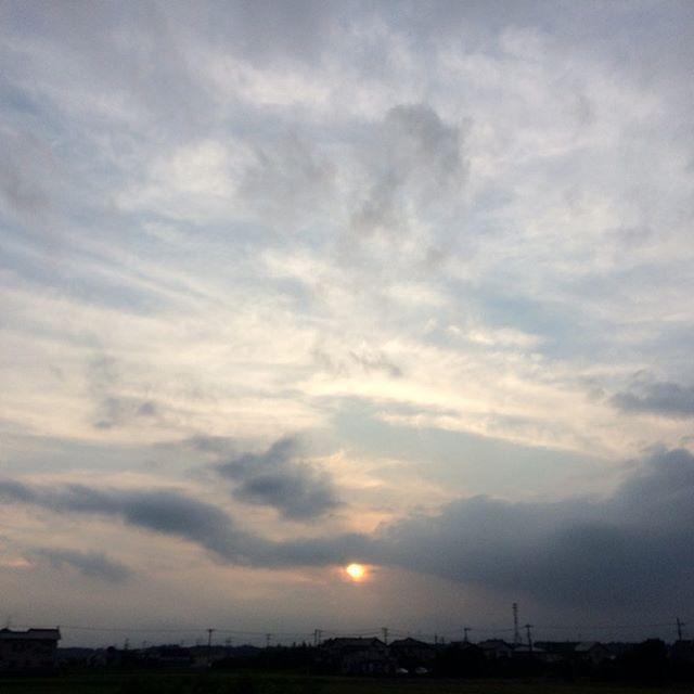 夕陽感あまりありませんが、ただの夕日ですただ無言で夕陽を見るだけの時間テントウムシなんかも見えているのでしょうかね?共有出来ていたならなんかいいですねぇ (from Instagram)